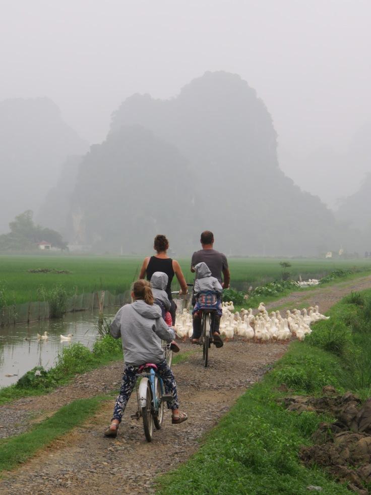 Rice fields Ninh Binh
