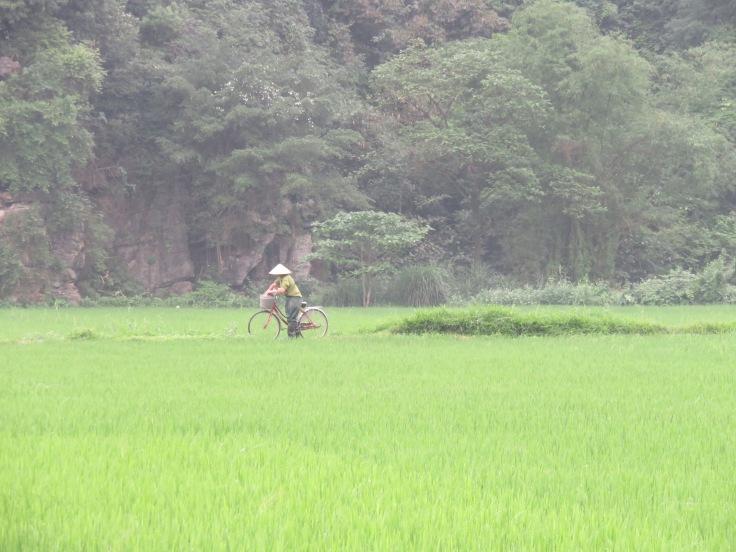 Bike in rice fiels Ninh Binh